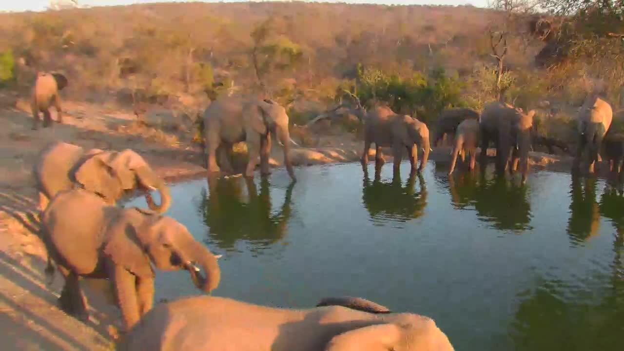 VIDEO:Elephant Breeding herd at the waterhole