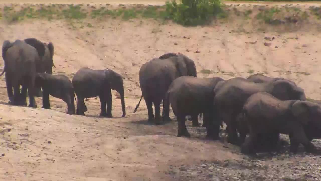 VIDEO: Elephant herd at Idube