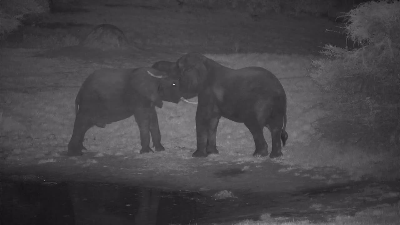 VIDEO: Elephants social behavior