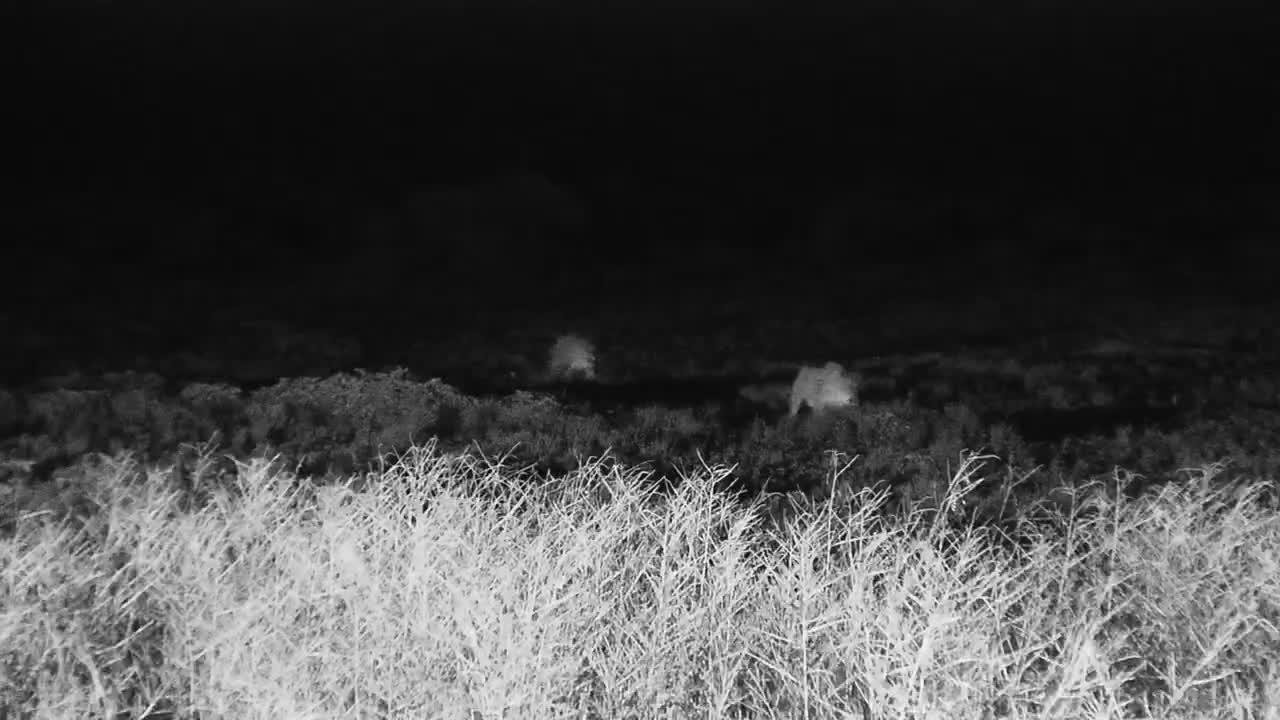 VIDEO: Lions visit in the rain - pt 1