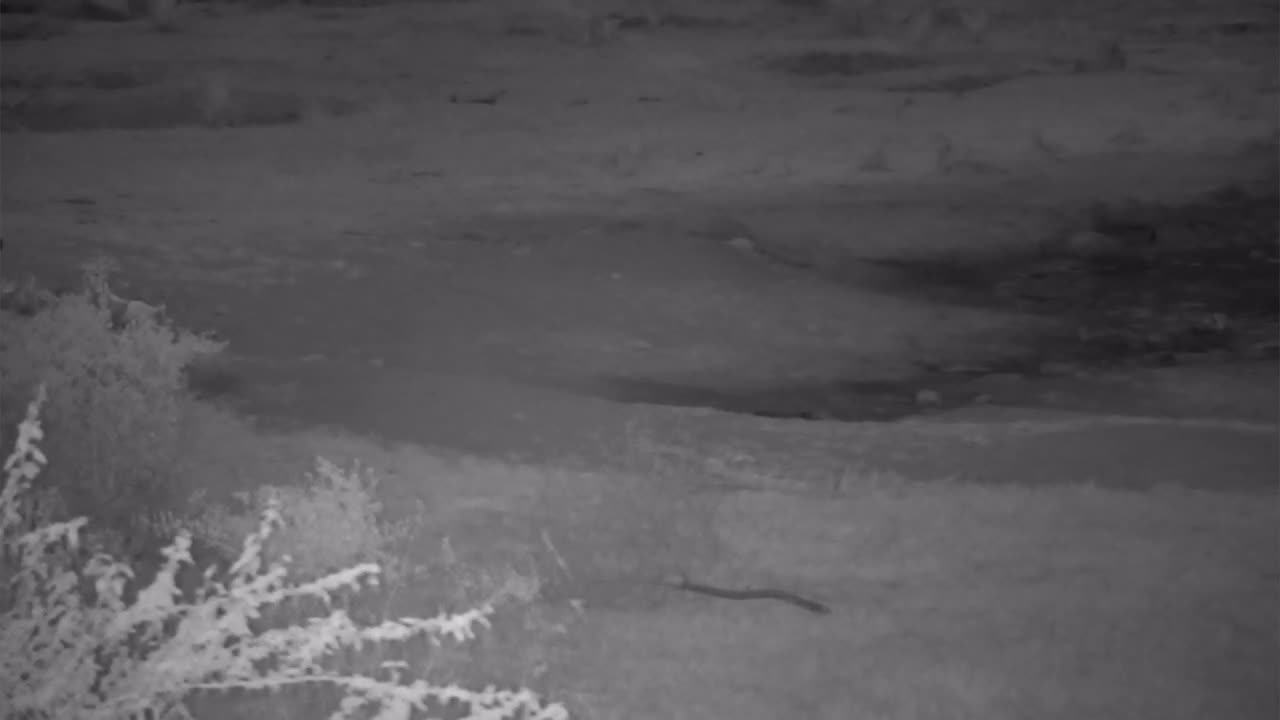 VIDEO: Lion cubs playing at the inlet