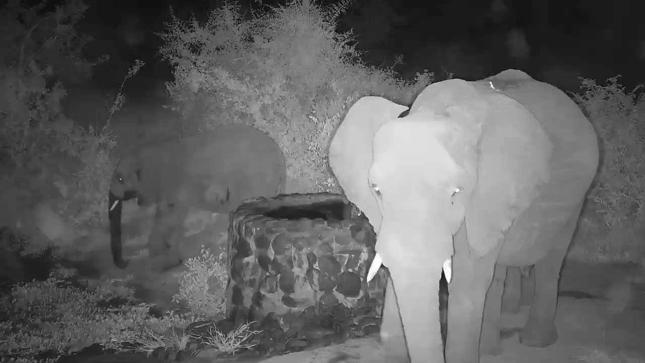 VIDEO: Elephants:  Big and small enjoying a drink. Part 1 of 2