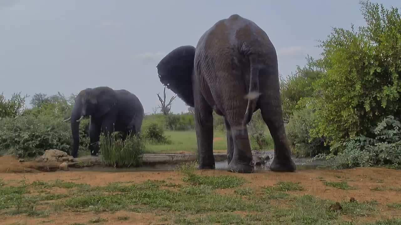 VIDEO: Elephants really enjoy the water