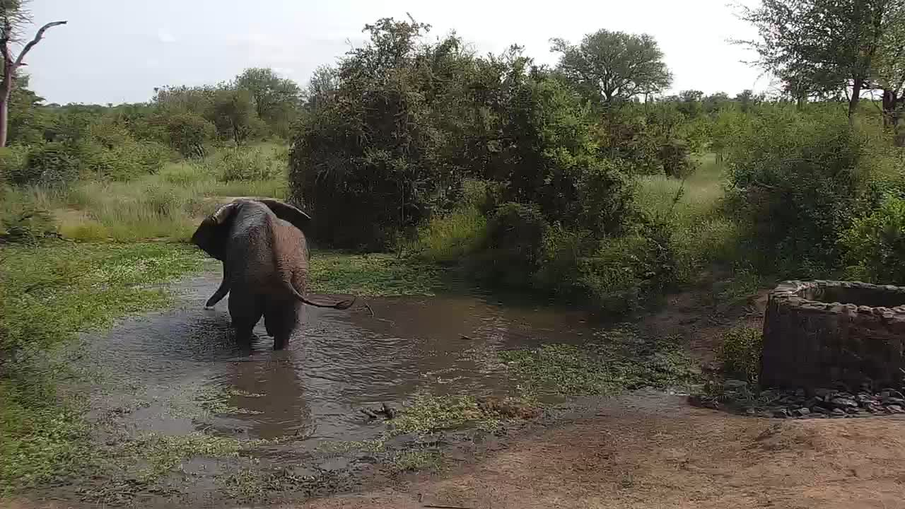 VIDEO:  Elephant having a bath