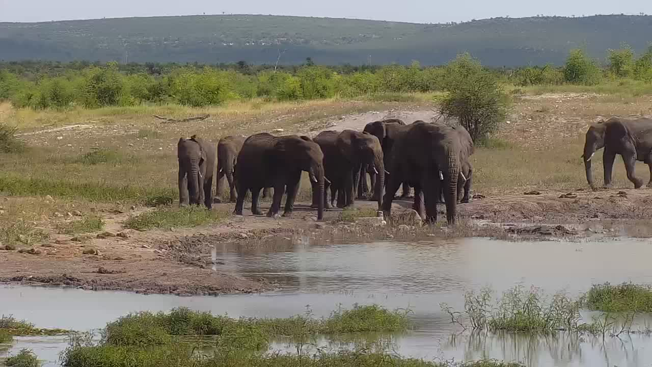 VIDEO: Elephant breeding family stops by the waterhole