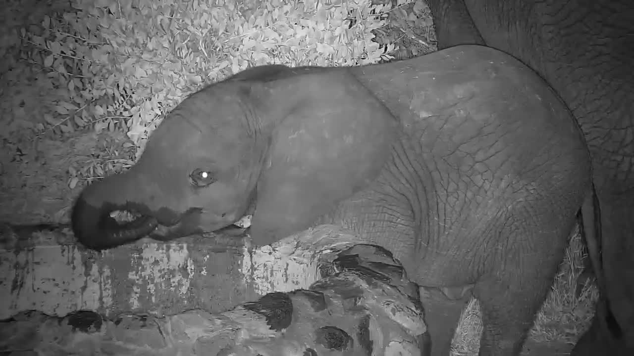 VIDEO: Young Elephant and Mother drinking at the dam