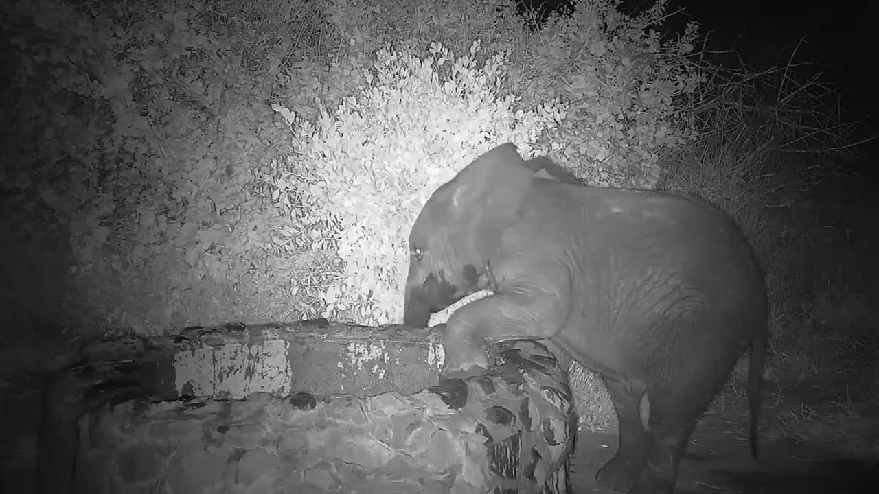 VIDEO: Young Elephant testing its trunk