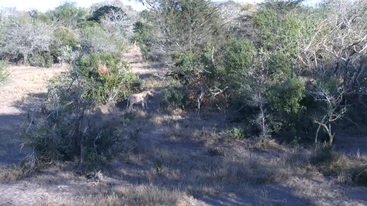 VIDEO:Nyalas came to waterhole area but saw the Lions and able to escape Lioness