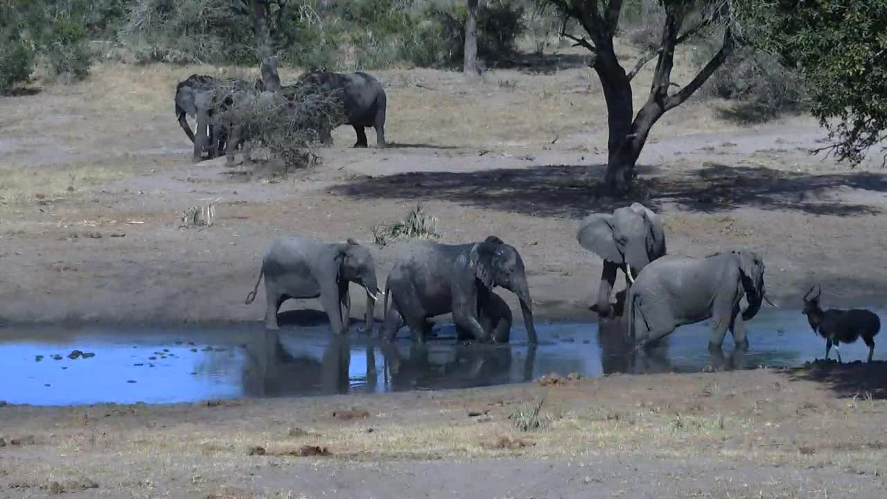 VIDEO: Elephants - all around the waterhole - very pleased with the fresh water