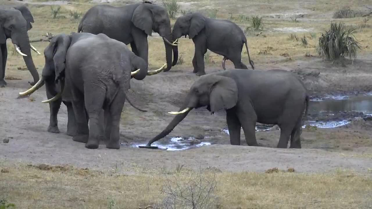 VIDEO: Elephants around the water inlet