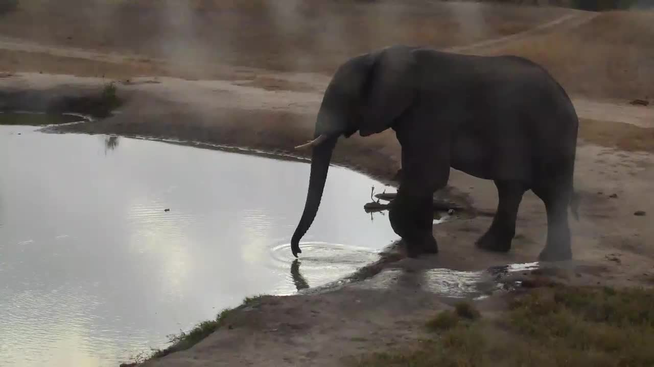 VIDEO: Elephant drinks the water from different places at the waterhole.