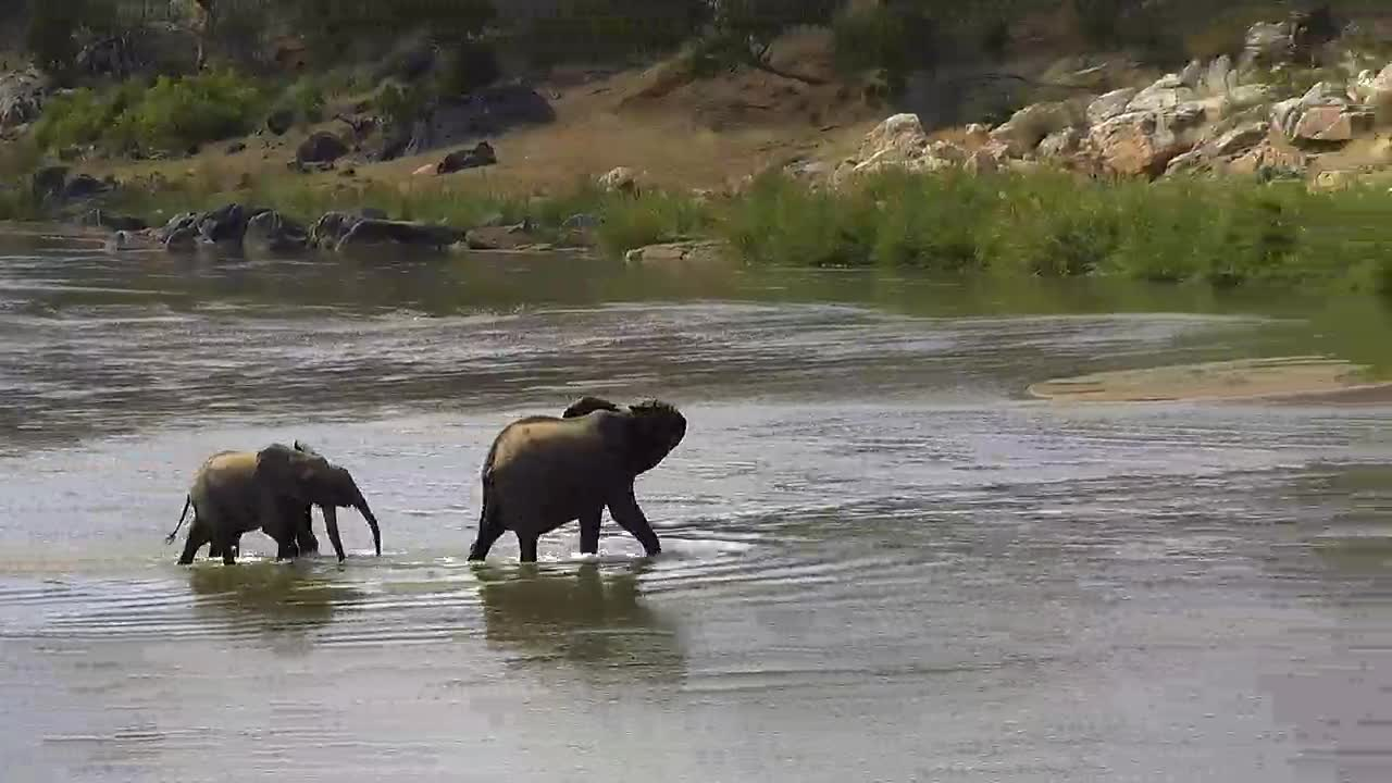 VIDEO: Mom and kids crossing the river