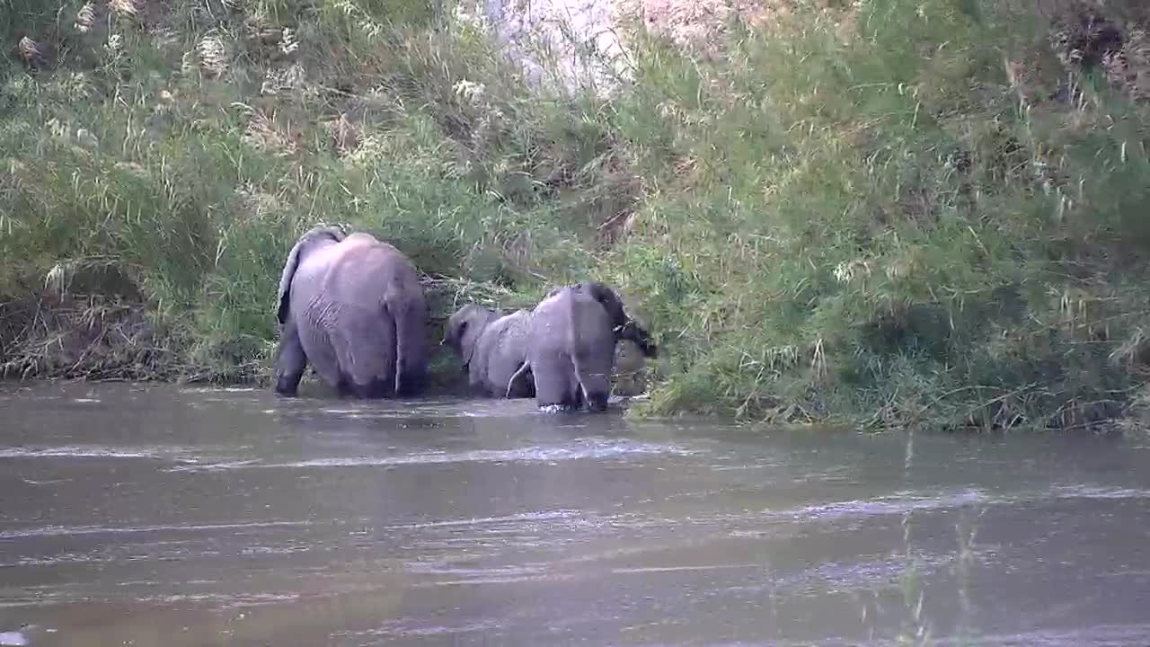 VIDEO: Mom and two kids eating along the bank, and the oldest crosses the river to the other side