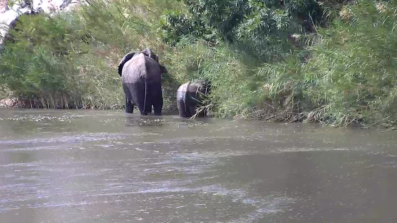 VIDEO: Mom and baby foraging for food along the bank