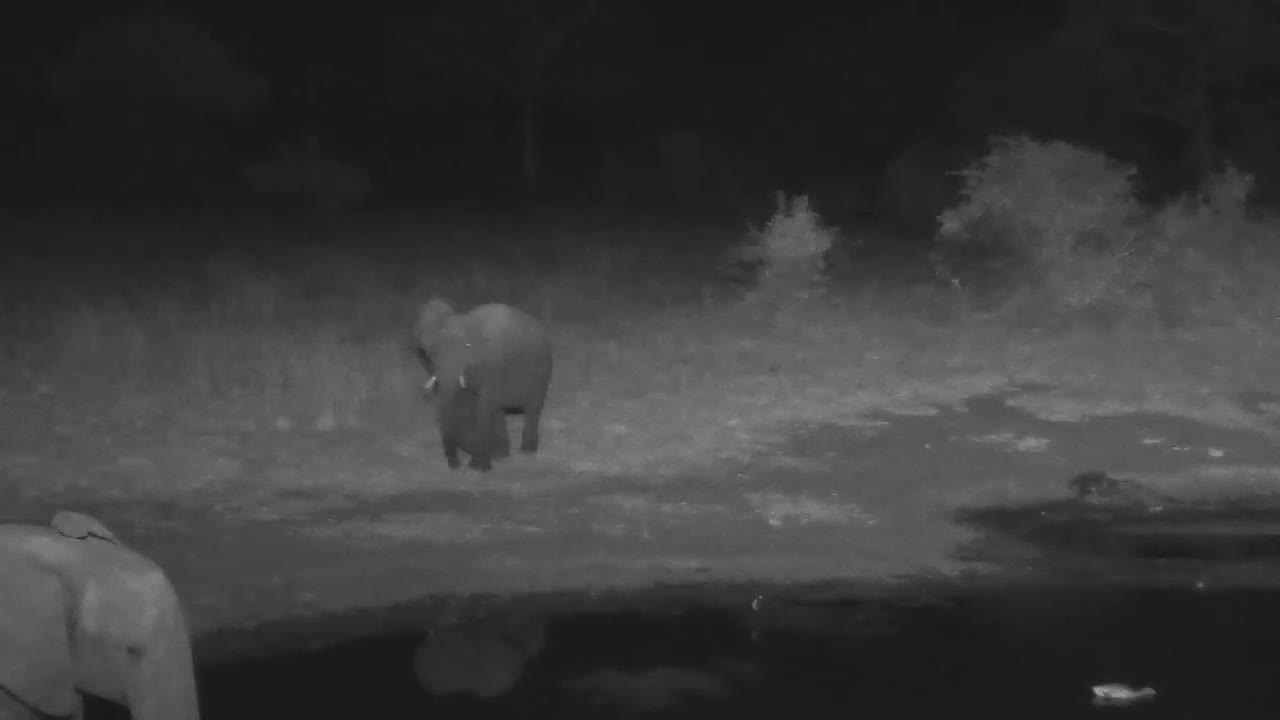 VIDEO: Two Young Elephants