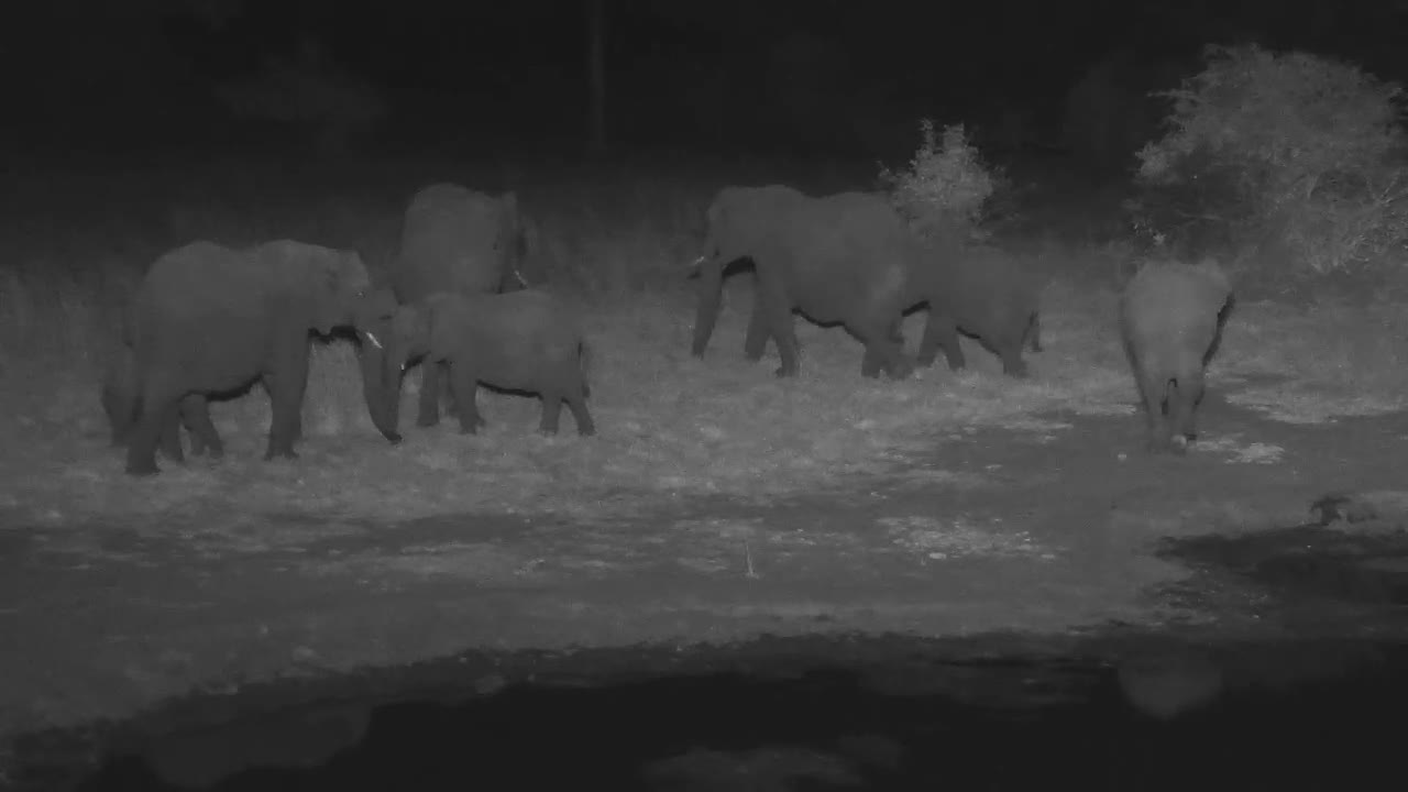 VIDEO:Elephant breeding herd with young at the waterhole