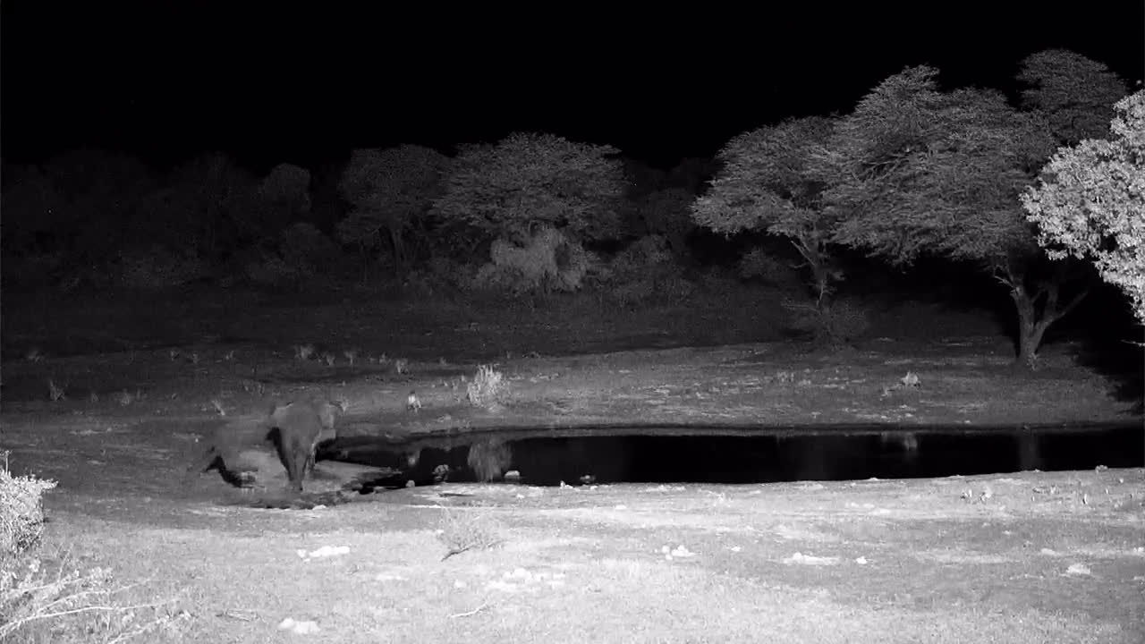 VIDEO:  Lion trying to get a drink but Elephant is not having it....