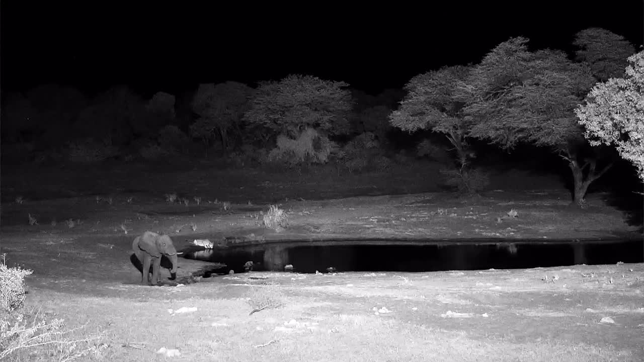 VIDEO:  Lion having a drink behind a Elephant