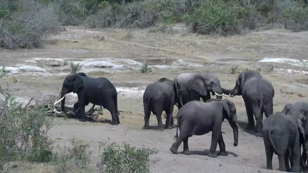 VIDEO: Elephants somewhat aggressive all around the waterhole - Giraffes and Waterbucks have no chance to get a drink