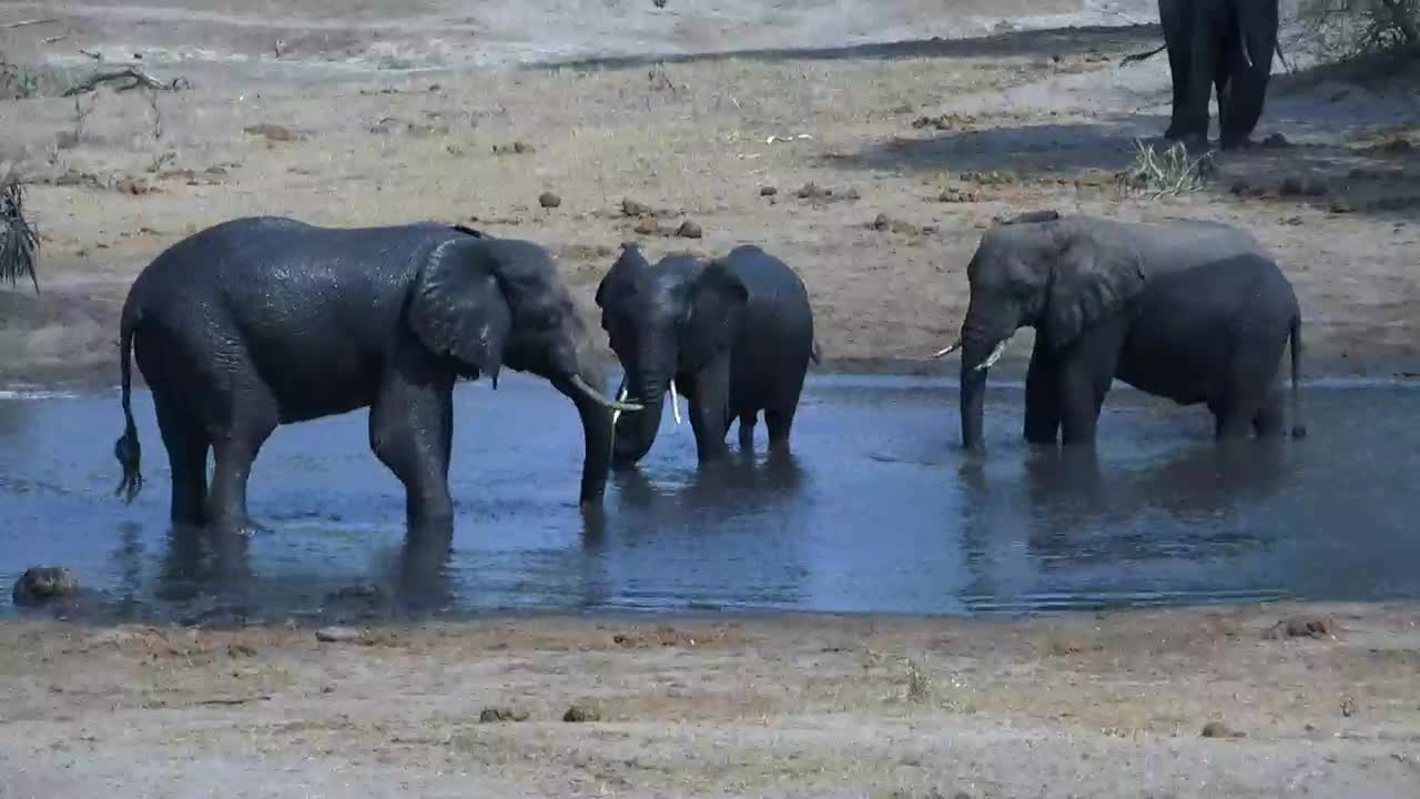 VIDEO: Elephants enjoy the water and have fun