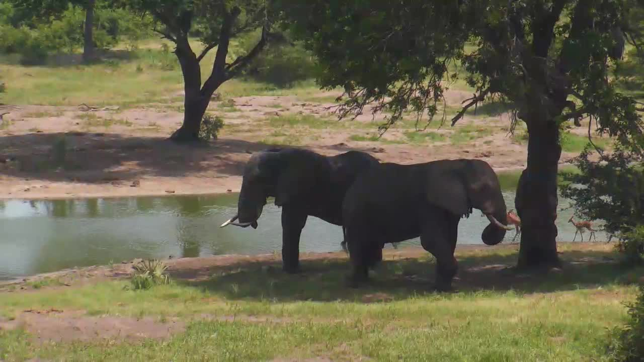 VIDEO: Elephants resting in the shade