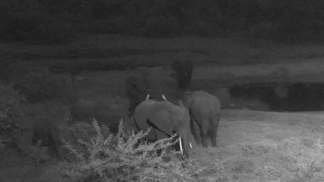 VIDEO: Elephant Herd around the waterhole