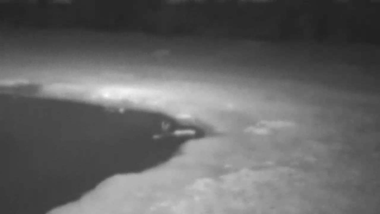 VIDEO: Male Lion walking by