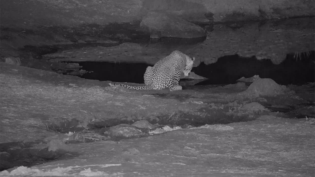 VIDEO: Leopard at the inlet