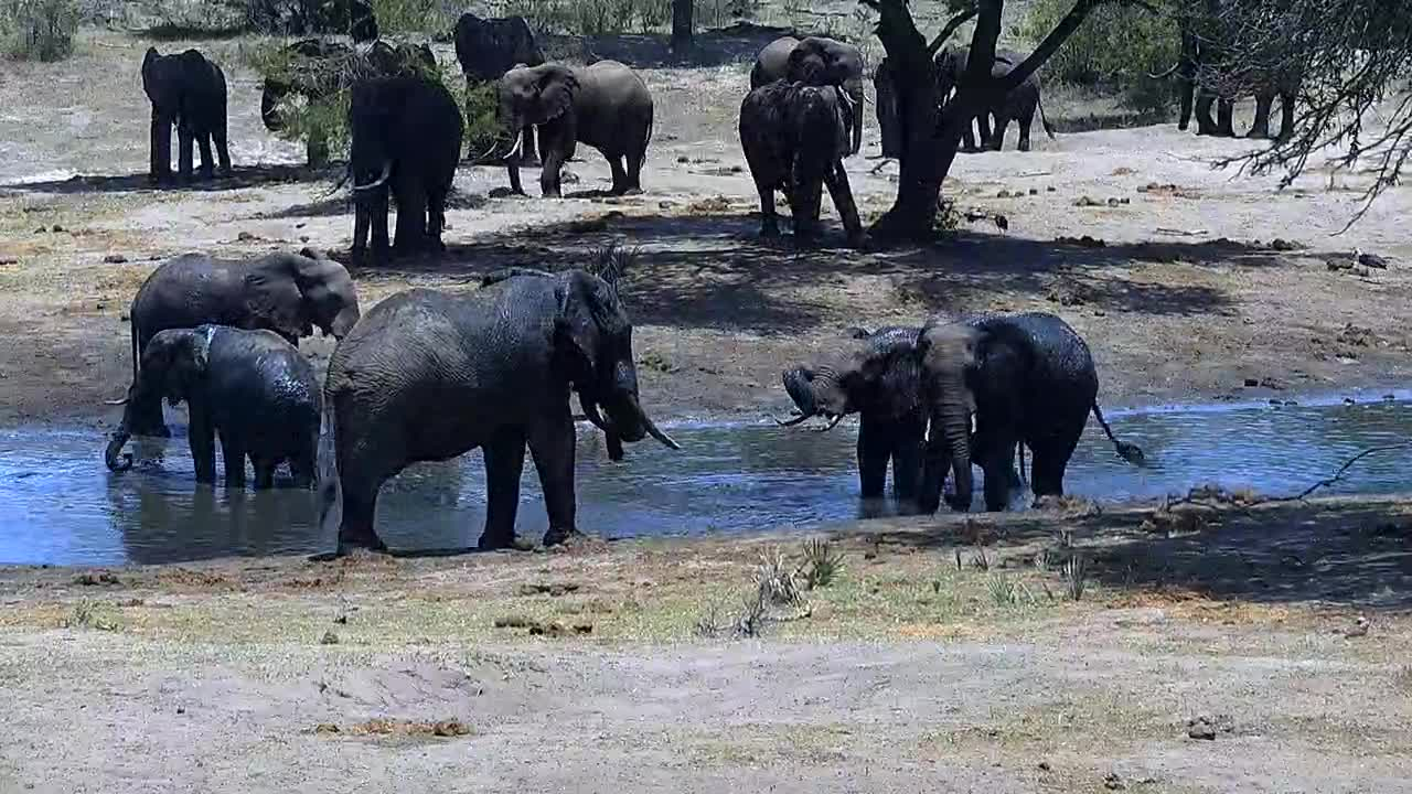 VIDEO: Elephants cooling off in the heat
