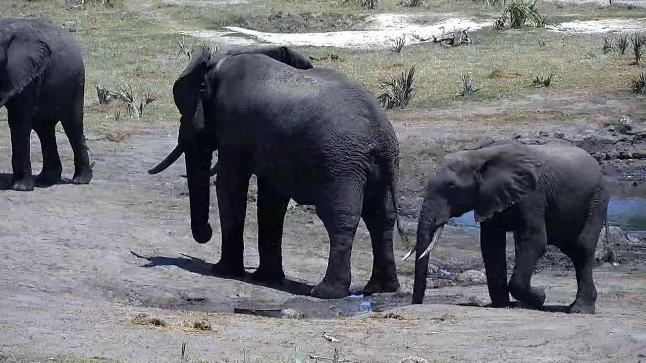 VIDEO: Elephants enjoy the fresh water