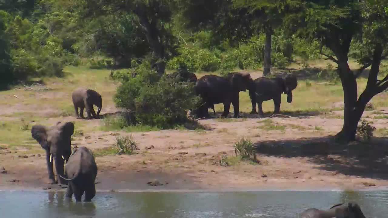 VIDEO: Elephant breeding herd with very small baby elephant