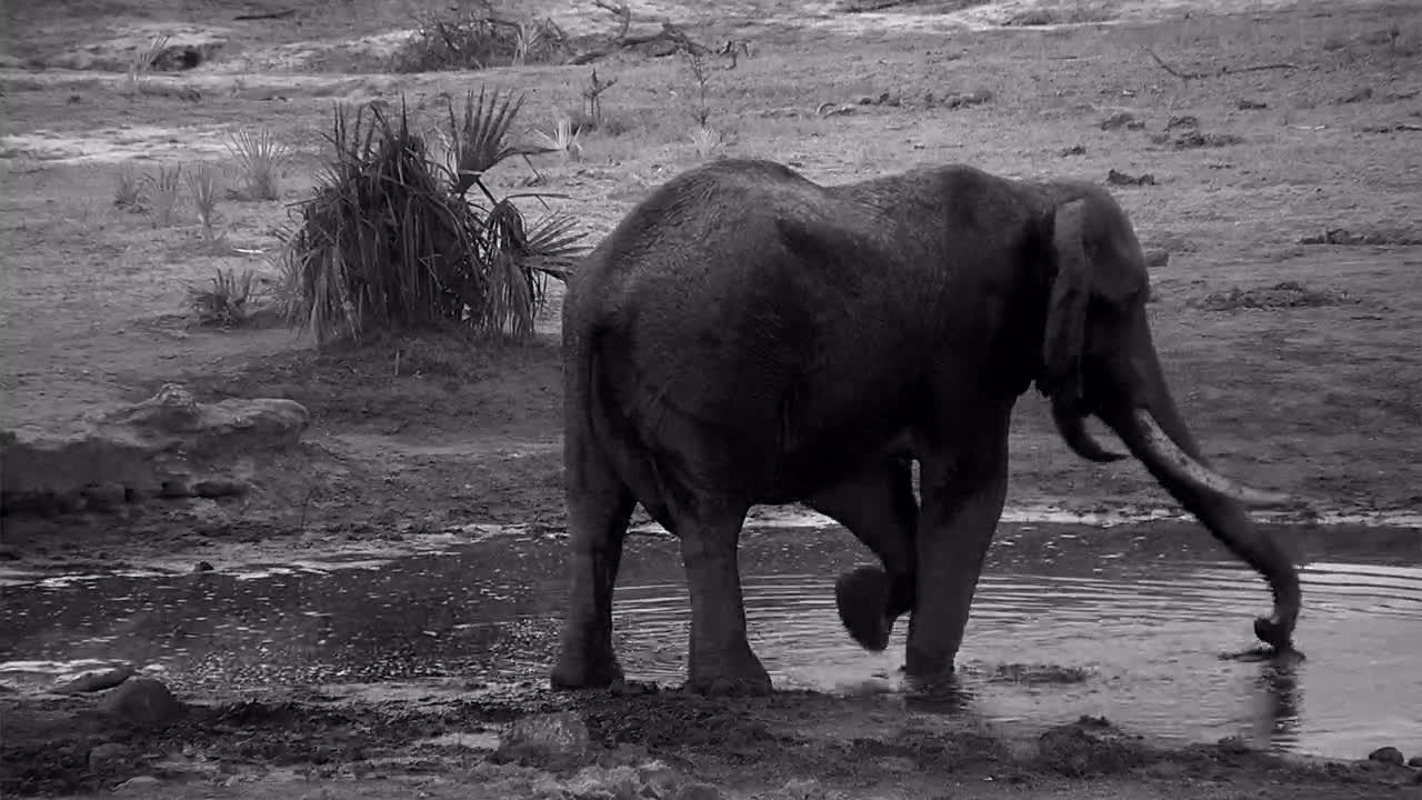 VIDEO:Elephant having an early morning bath