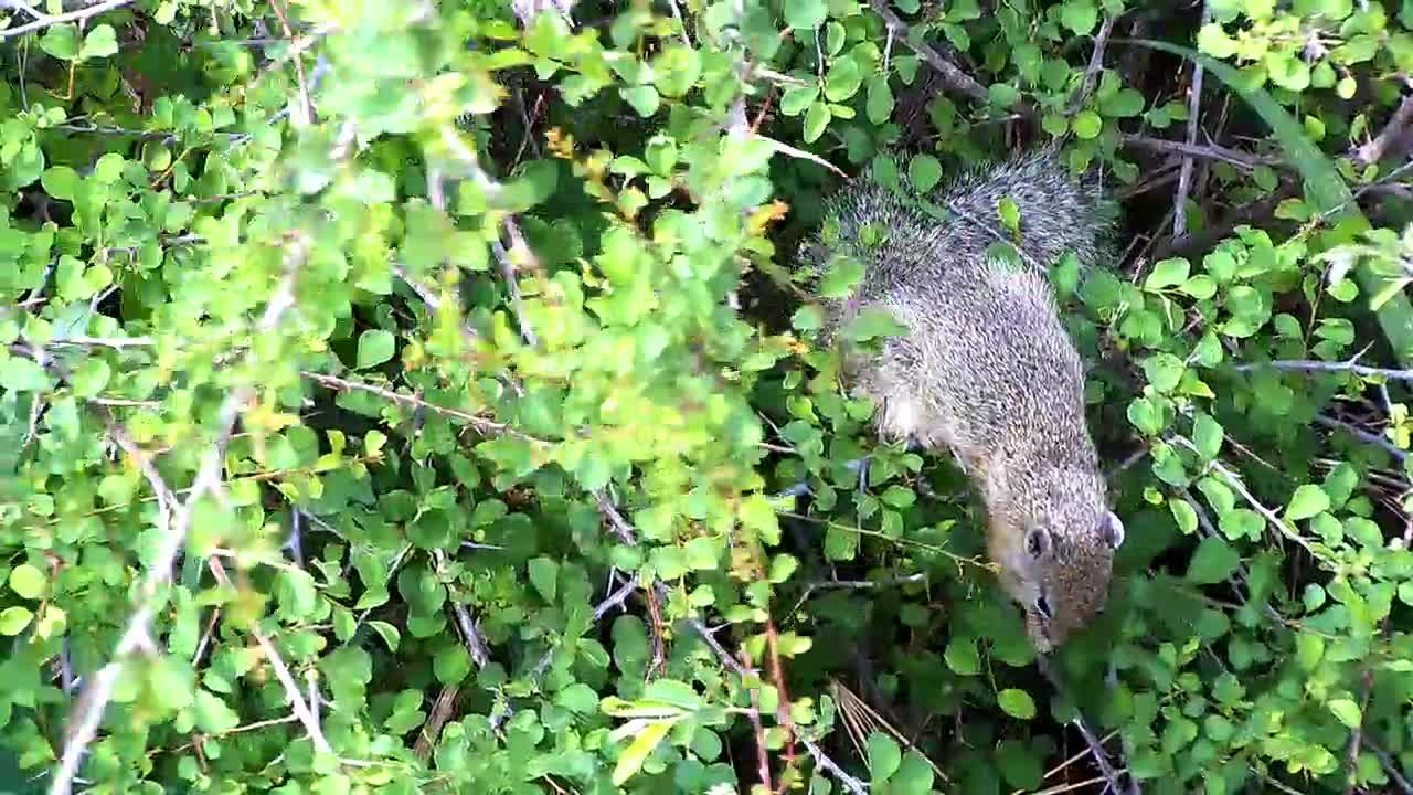 VIDEO: Nice  little Tree Squirrel  eating