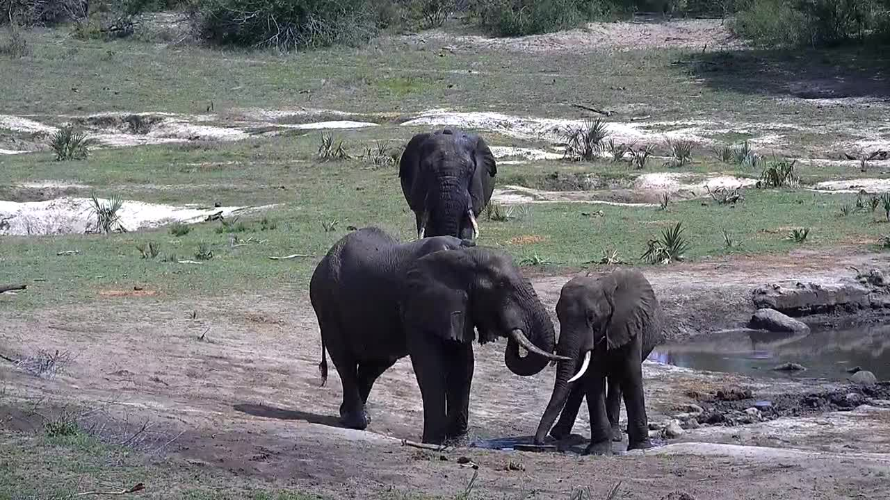 VIDEO: Elephants - a bit aggressiv to get some frish water