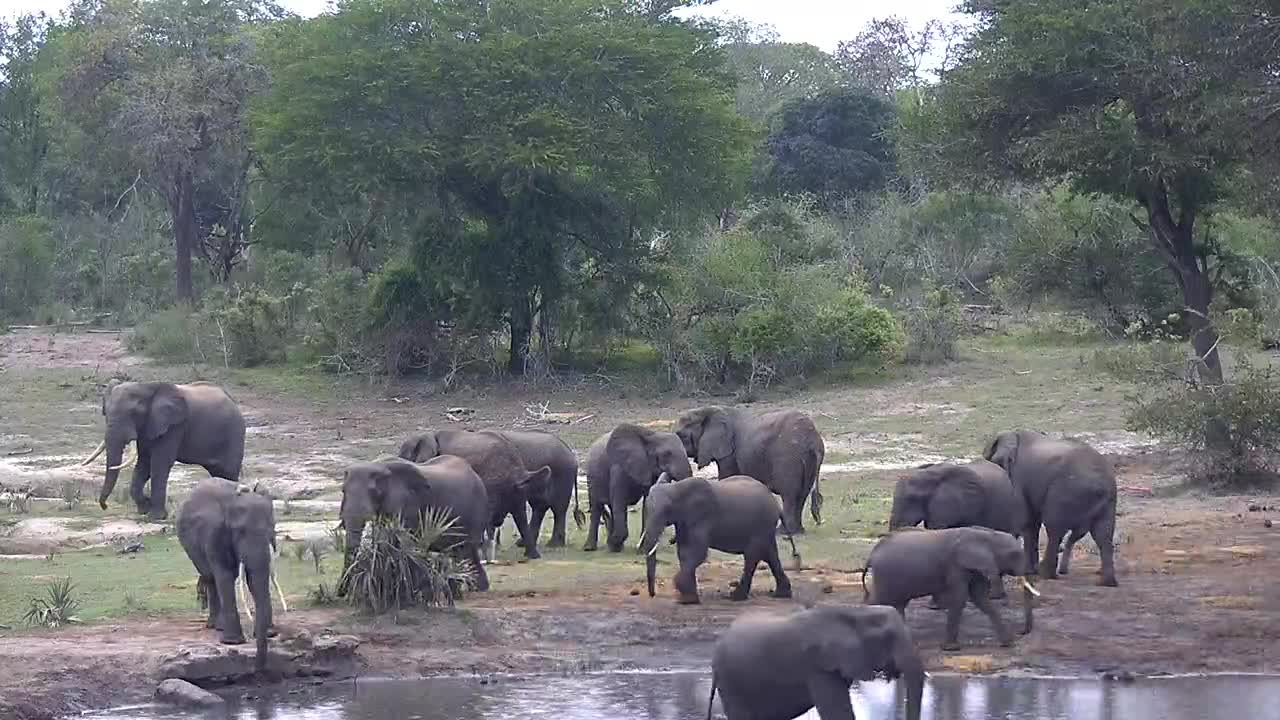 VIDEO: Elephant Herd came for drink and walking back and forth at the shore