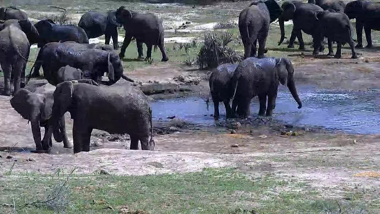 VIDEO: Lot of Elephants enjoy the water for drinking and cooling off