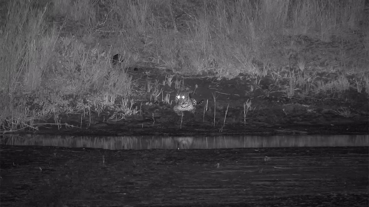 VIDEO:  Leopard relaxing on the river edge