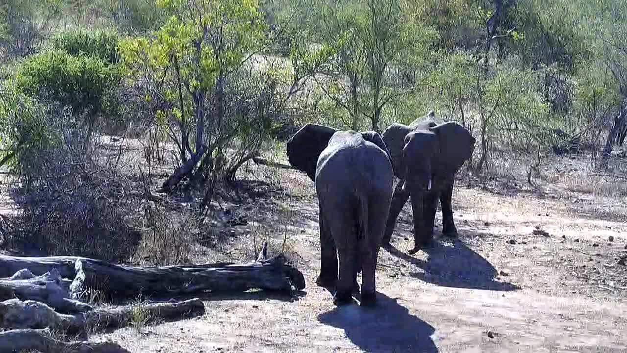 VIDEO: Elephants drinking  water after playing with each other.