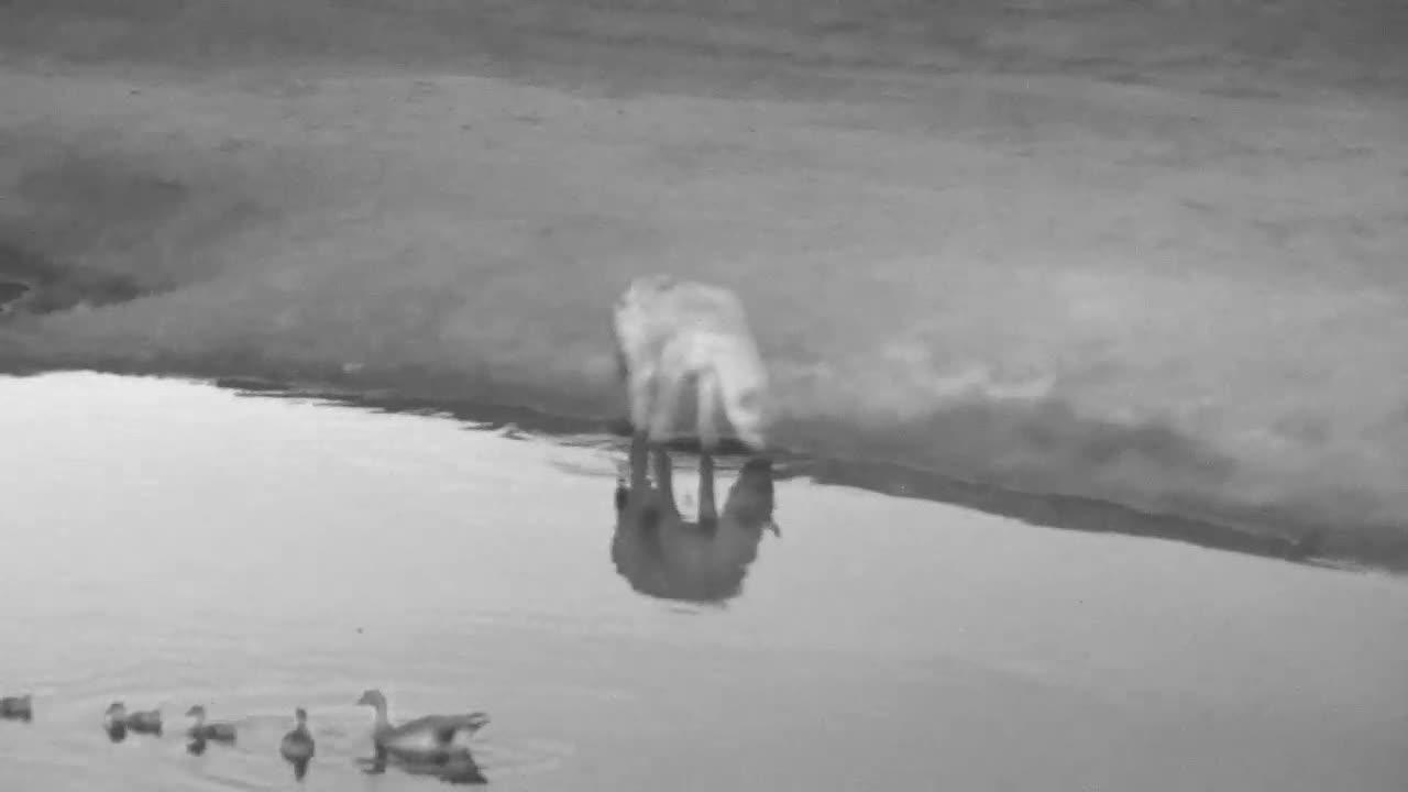 VIDEO:  Hyaena prowling around the waterhole