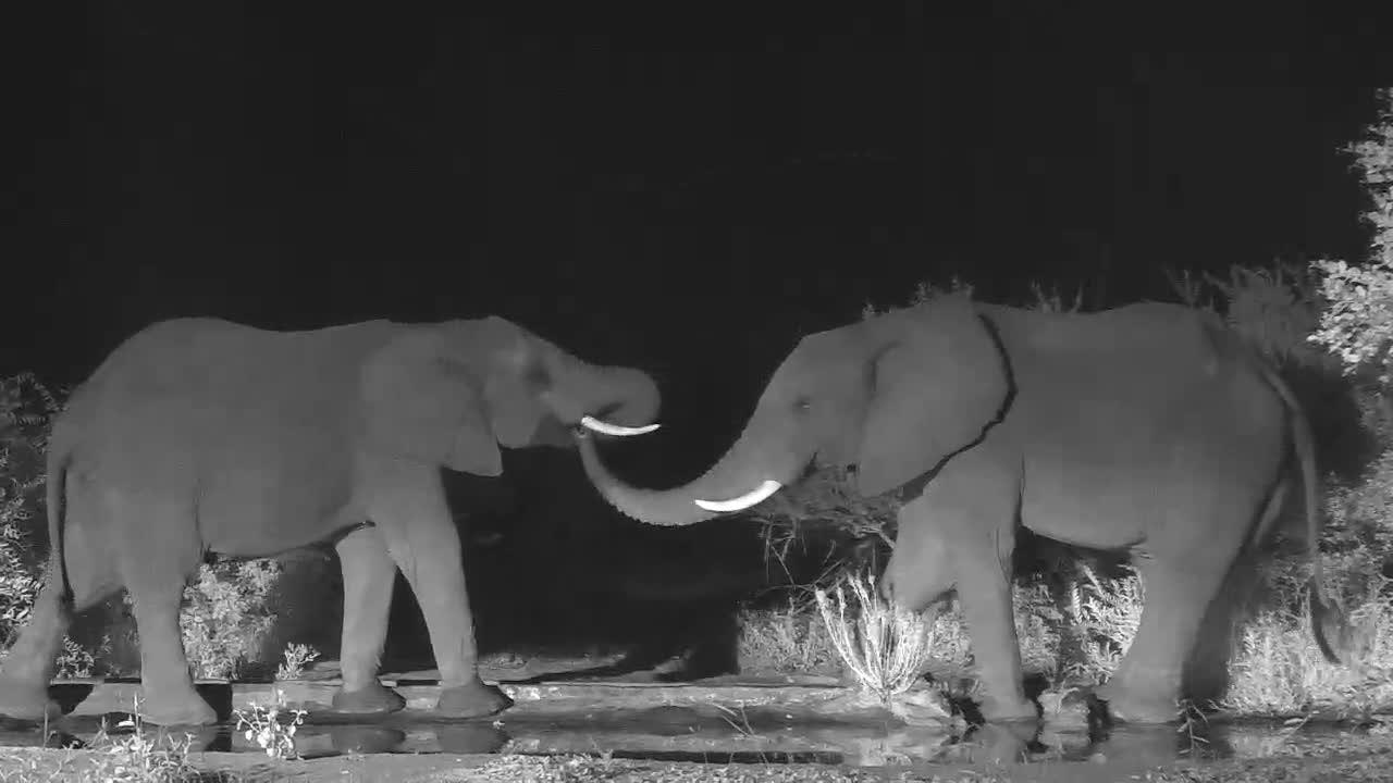 VIDEO: Elephant's social behavior
