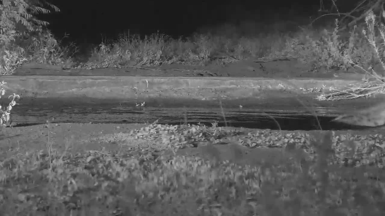VIDEO: Hyaena Doggie Paddles