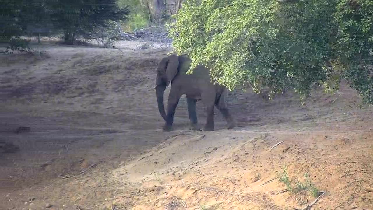 VIDEO:  Elephants walking along the riverbank
