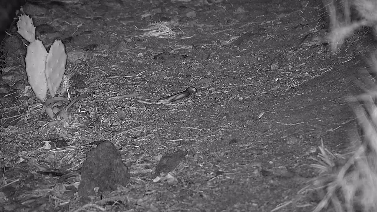 VIDEO: Millipede feeding at the riverbank