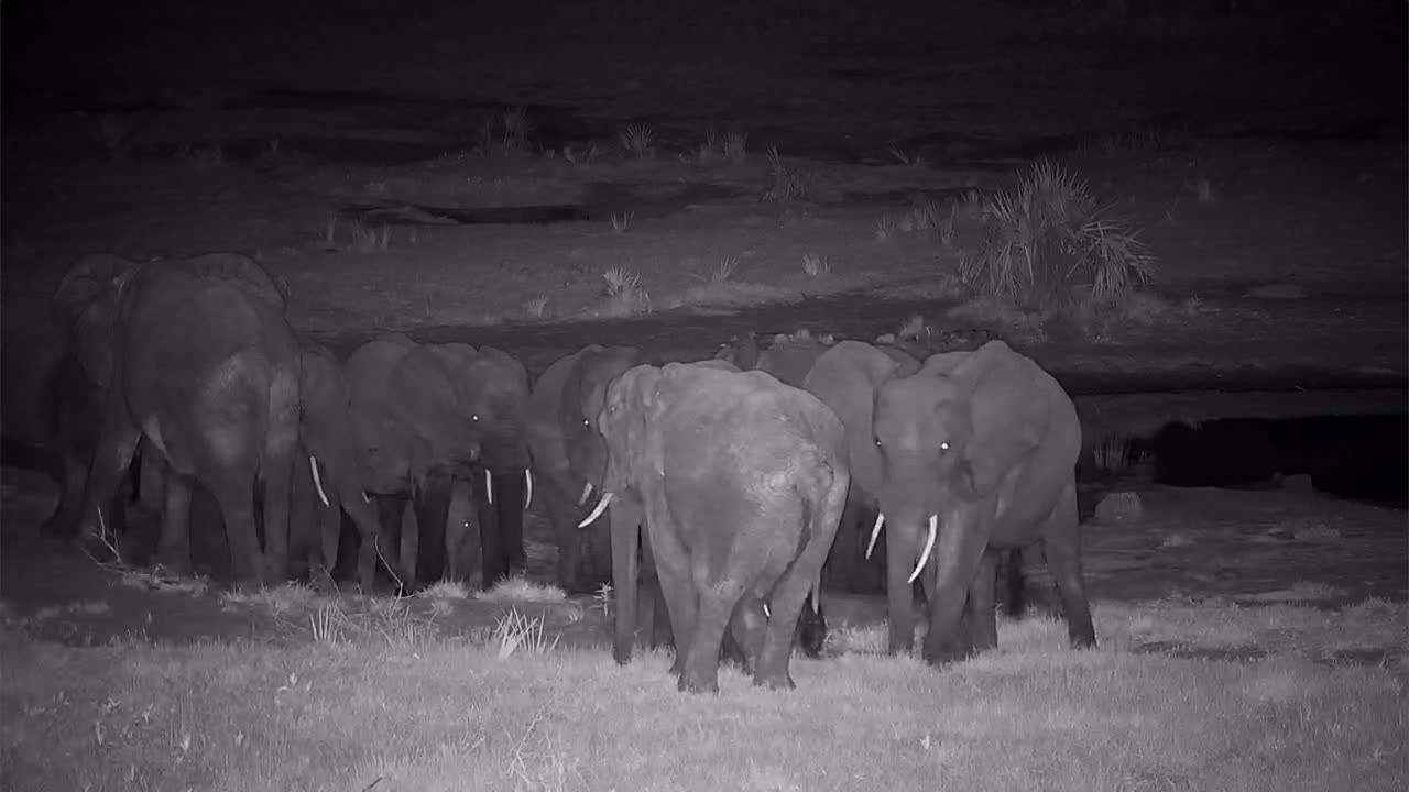 VIDEO: Breeding Herd of Elephants came for a drink to the waterhole - but a little one prefers mother's milk