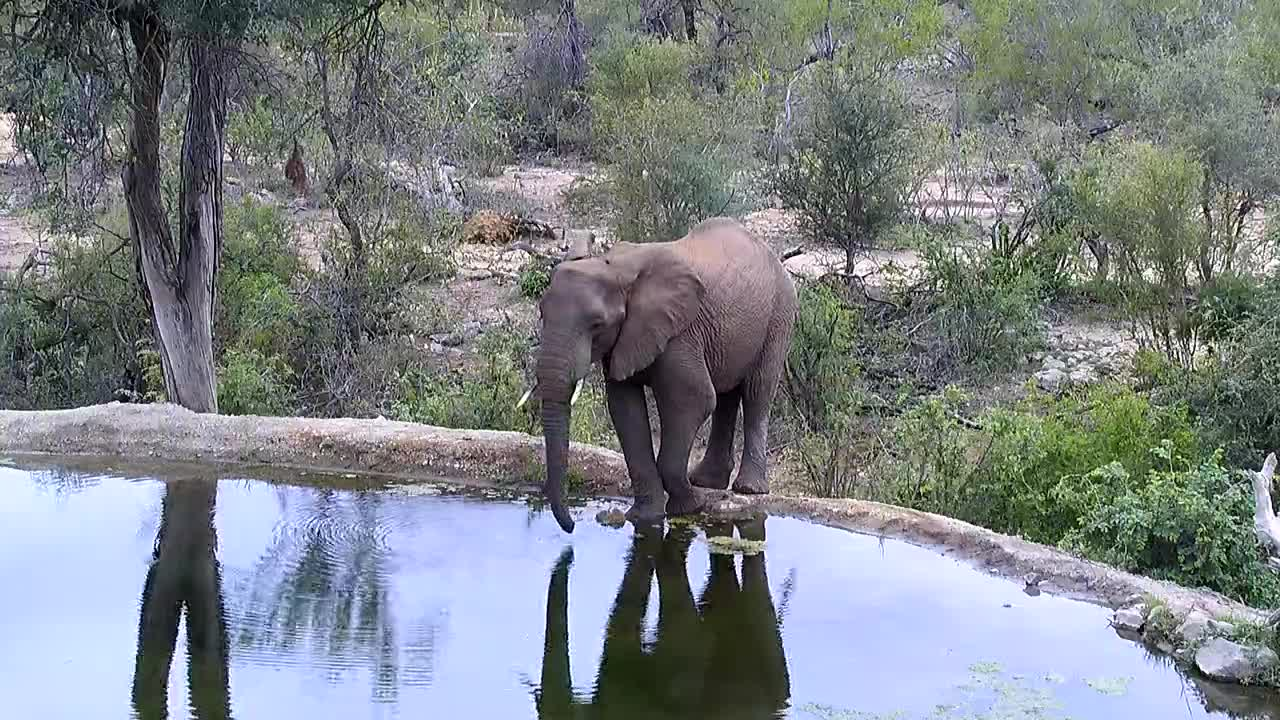 VIDEO: Elephant came for a drink