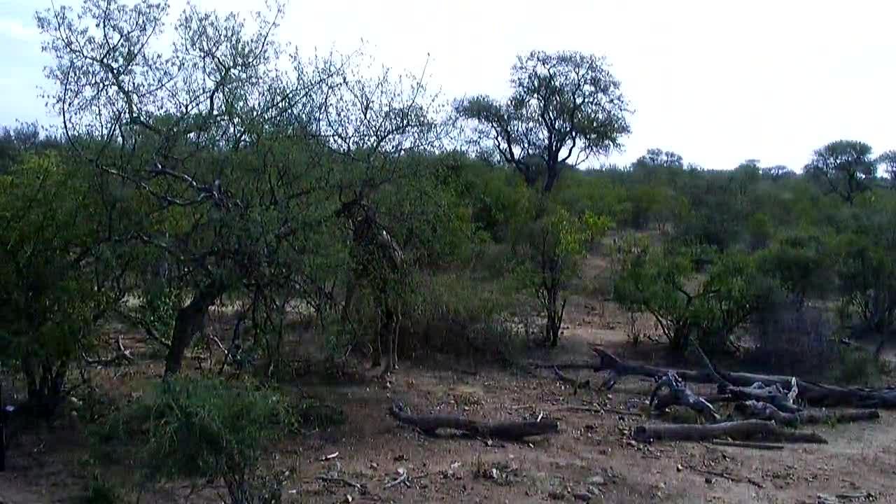 VIDEO: Giraffe and Elephants  at the waterhole