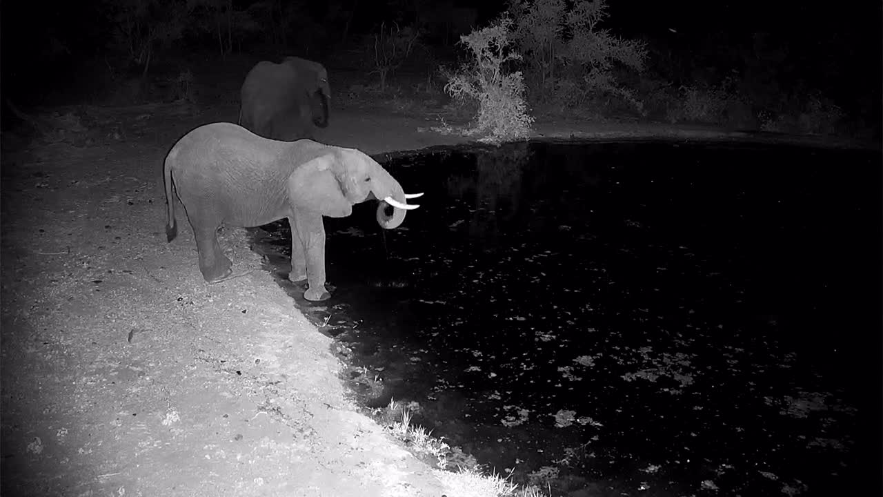 VIDEO: Elephants came for a drink and tried the water from all sides