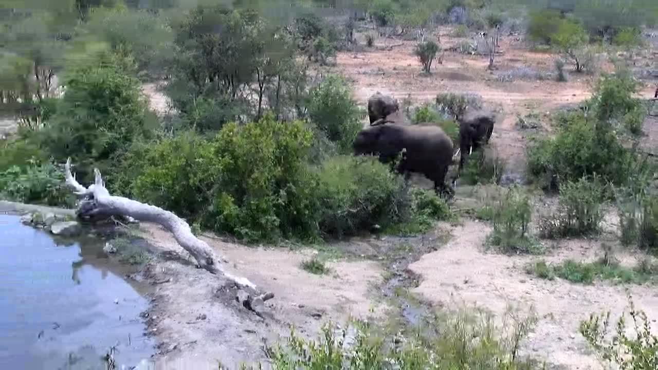 VIDEO: Elephants arriving at the waterhole