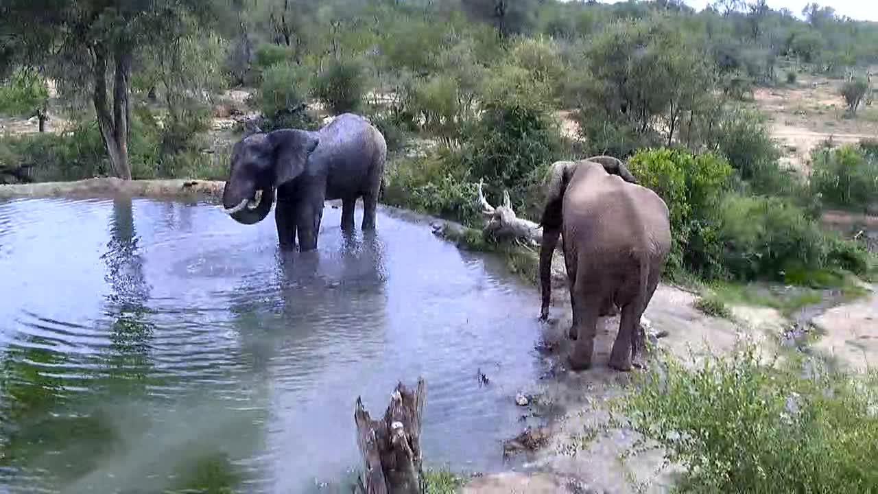 VIDEO: Elephants came for a shower and a drink.