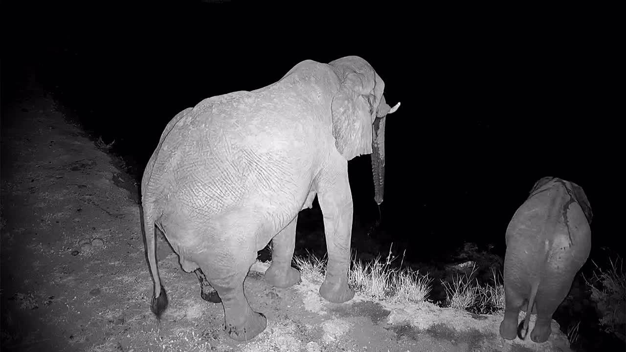 VIDEO:Elephant herd at the waterhole